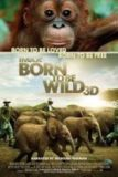 'Born to be Wild 3D' Review